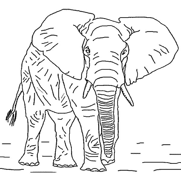 elephant coloring cute elephant coloring pages at getdrawings free download coloring elephant