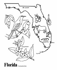 florida state symbols coloring pages florida state symbols coloring pages florida symbols state coloring symbols florida pages