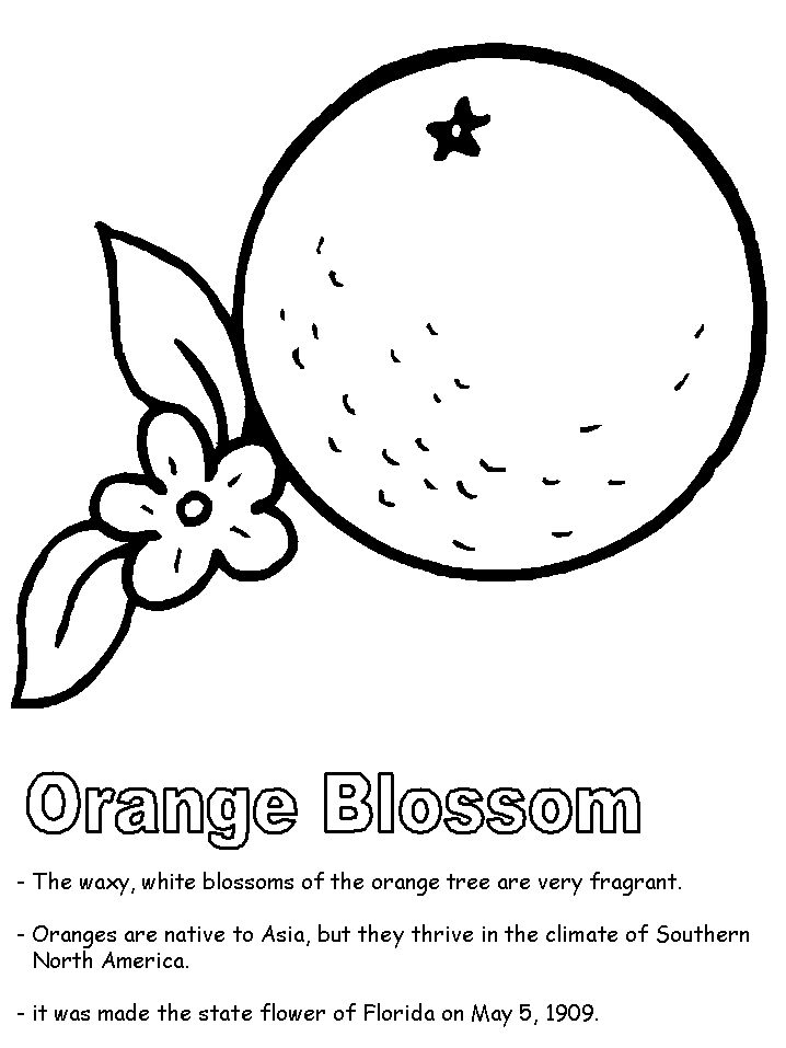 florida state symbols coloring pages florida state symbols coloring pages united states state coloring state pages symbols florida