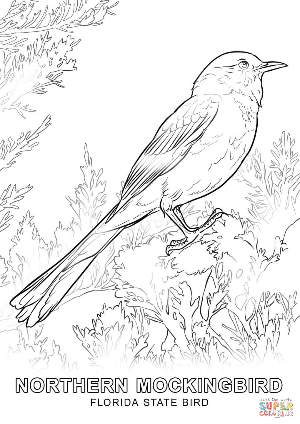 florida state symbols coloring pages florida state tree coloring page coloring pages coloring symbols state pages florida
