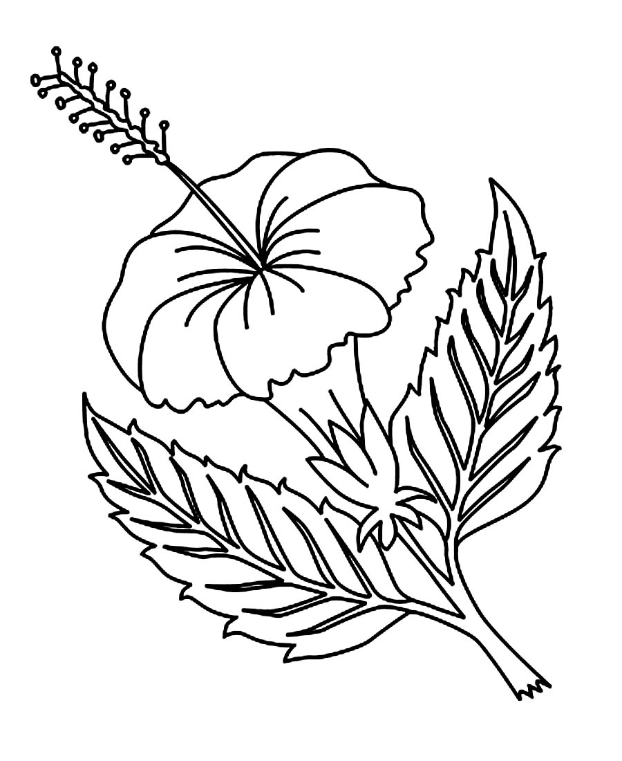 flower printable coloring sheets free printable hibiscus coloring pages for kids flower printable coloring sheets