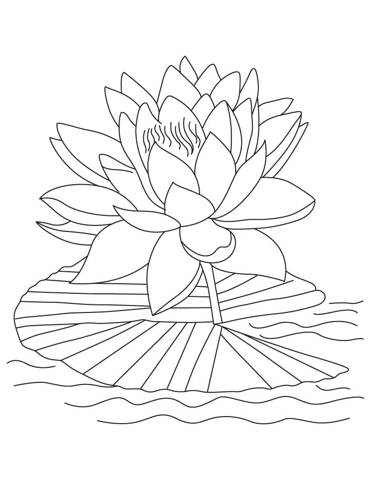 flower printable coloring sheets free printable lotus coloring pages for kids sheets coloring printable flower