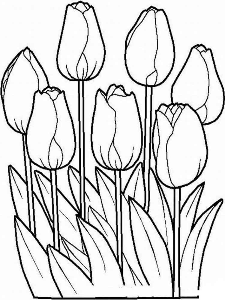 flower printable coloring sheets tulip coloring pages download and print tulip coloring pages printable coloring sheets flower