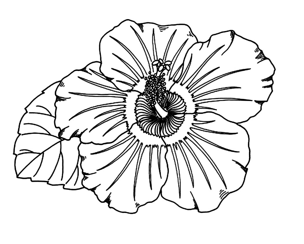 flowers you can print and color free printable hibiscus coloring pages for kids flowers color can and print you
