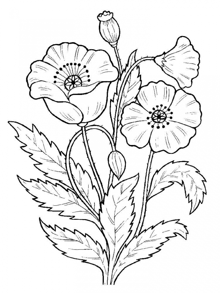 flowers you can print and color get this flowers coloring pages kids printable 2167 can you print color flowers and