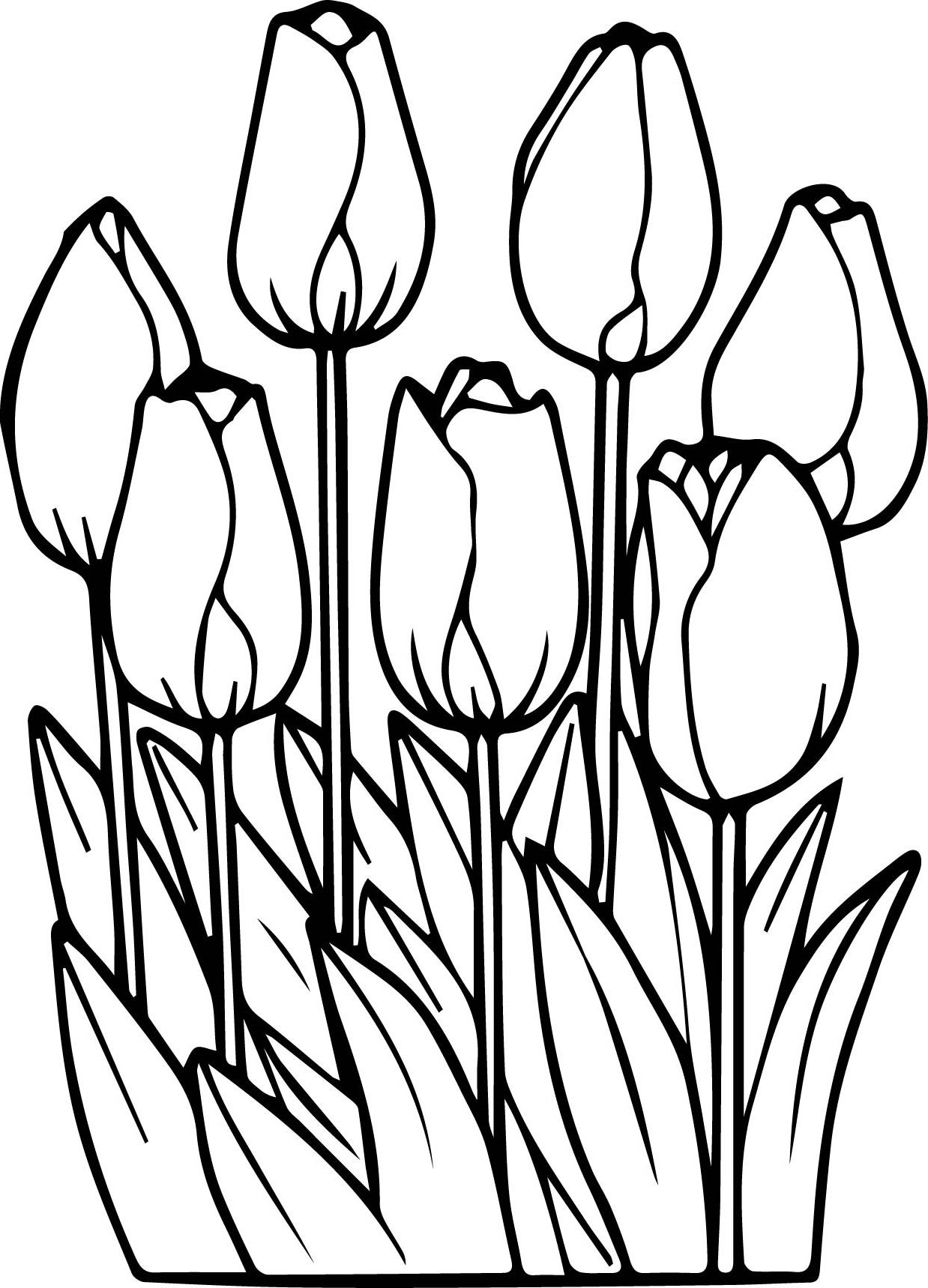 flowers you can print and color printable tulips flower coloring pages k5 worksheets color and print can flowers you