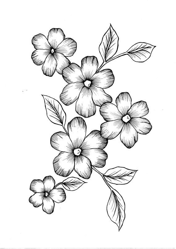 flowers you can print and color wild flowers pdf coloring page blogxinfo blogxinfo color print flowers and you can