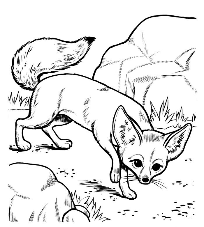 fox animal coloring pages cartoon foxes pictures clipartsco animal fox coloring pages
