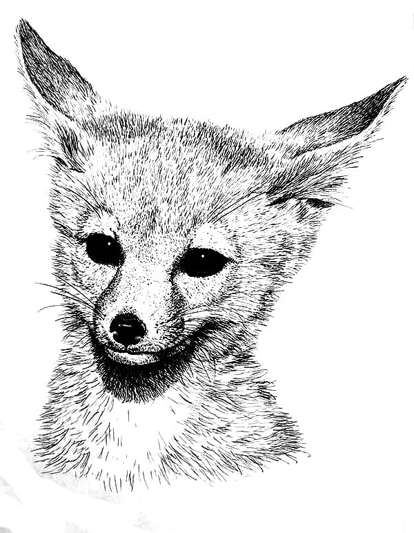fox animal coloring pages fox with beautiful patterns foxes adult coloring pages animal fox coloring pages