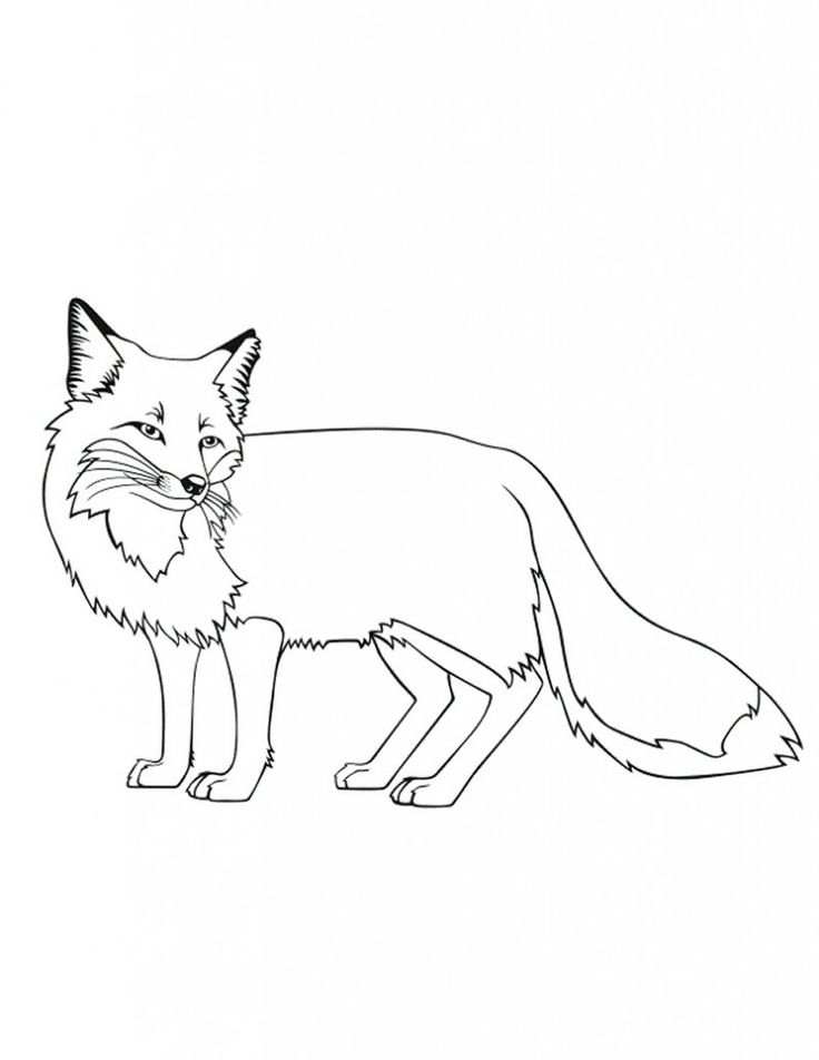 fox animal coloring pages free fox coloring pages animal coloring fox pages