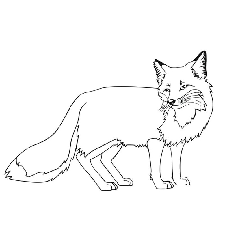 foxes coloring pages cute fox coloring pages at getcoloringscom free foxes coloring pages