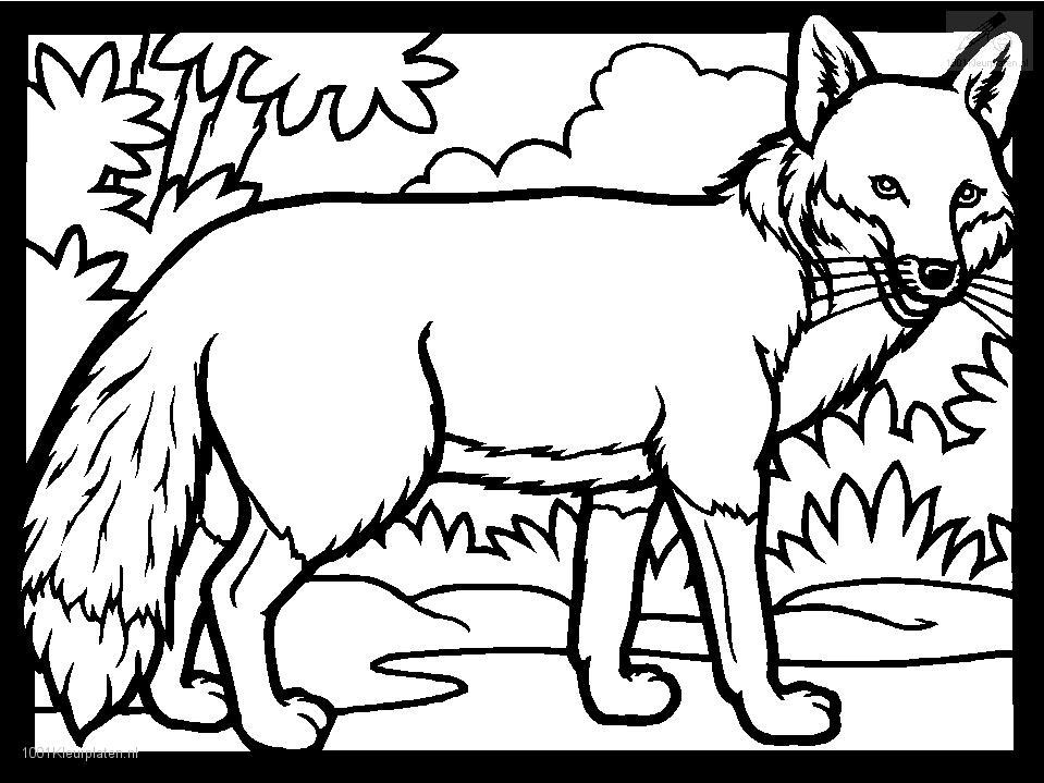 foxes coloring pages fox coloring pages to download and print for free pages coloring foxes
