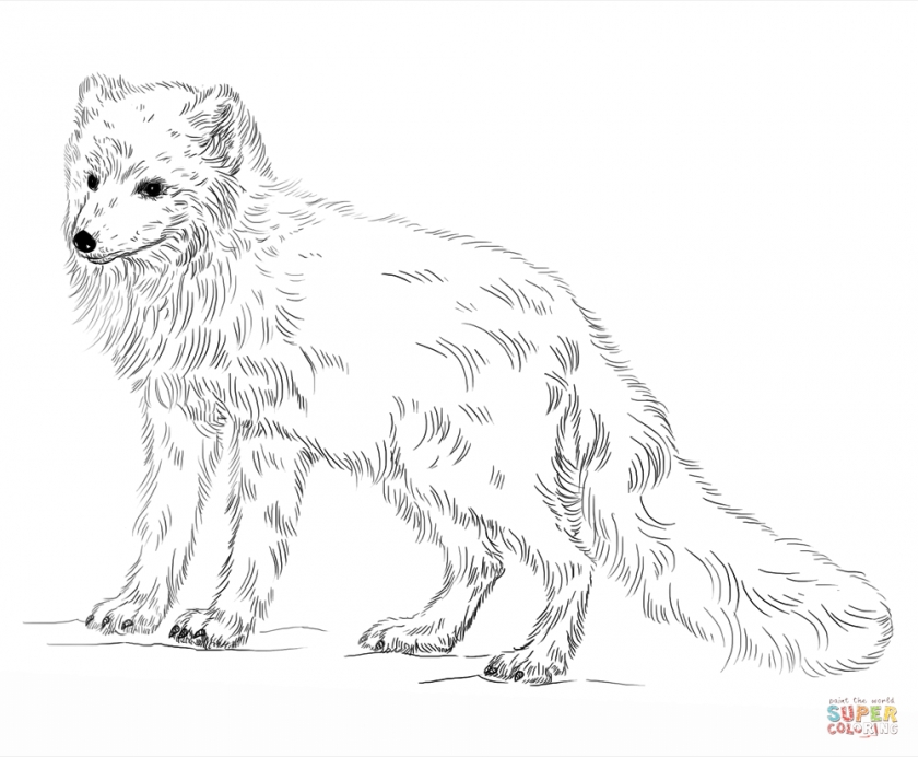 foxes coloring pages get this arctic fox coloring pages 73192 foxes coloring pages