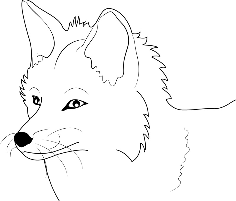 foxes coloring pages realistic fox coloring pages at getcoloringscom free pages foxes coloring