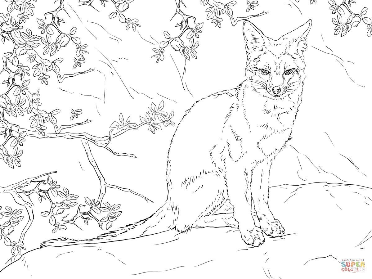 foxes coloring pages realistic fox coloring pages at getcoloringscom free pages foxes coloring 1 1