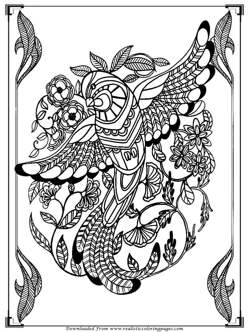 free bird coloring pages printable birds coloring pages for adults realistic coloring bird pages free