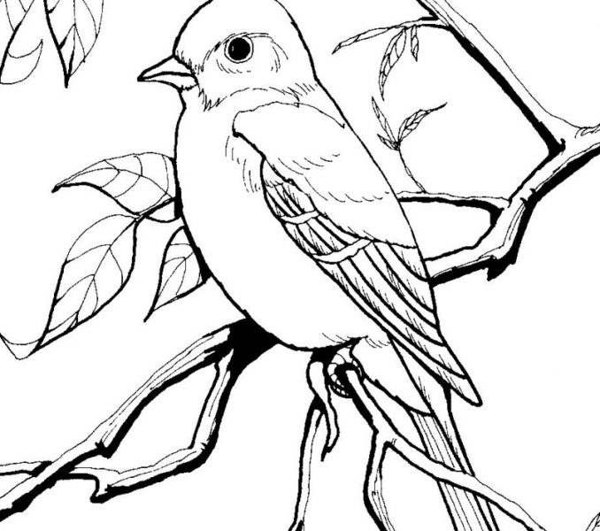 free bird coloring pages simple bird coloring pages at getdrawings free download bird pages coloring free