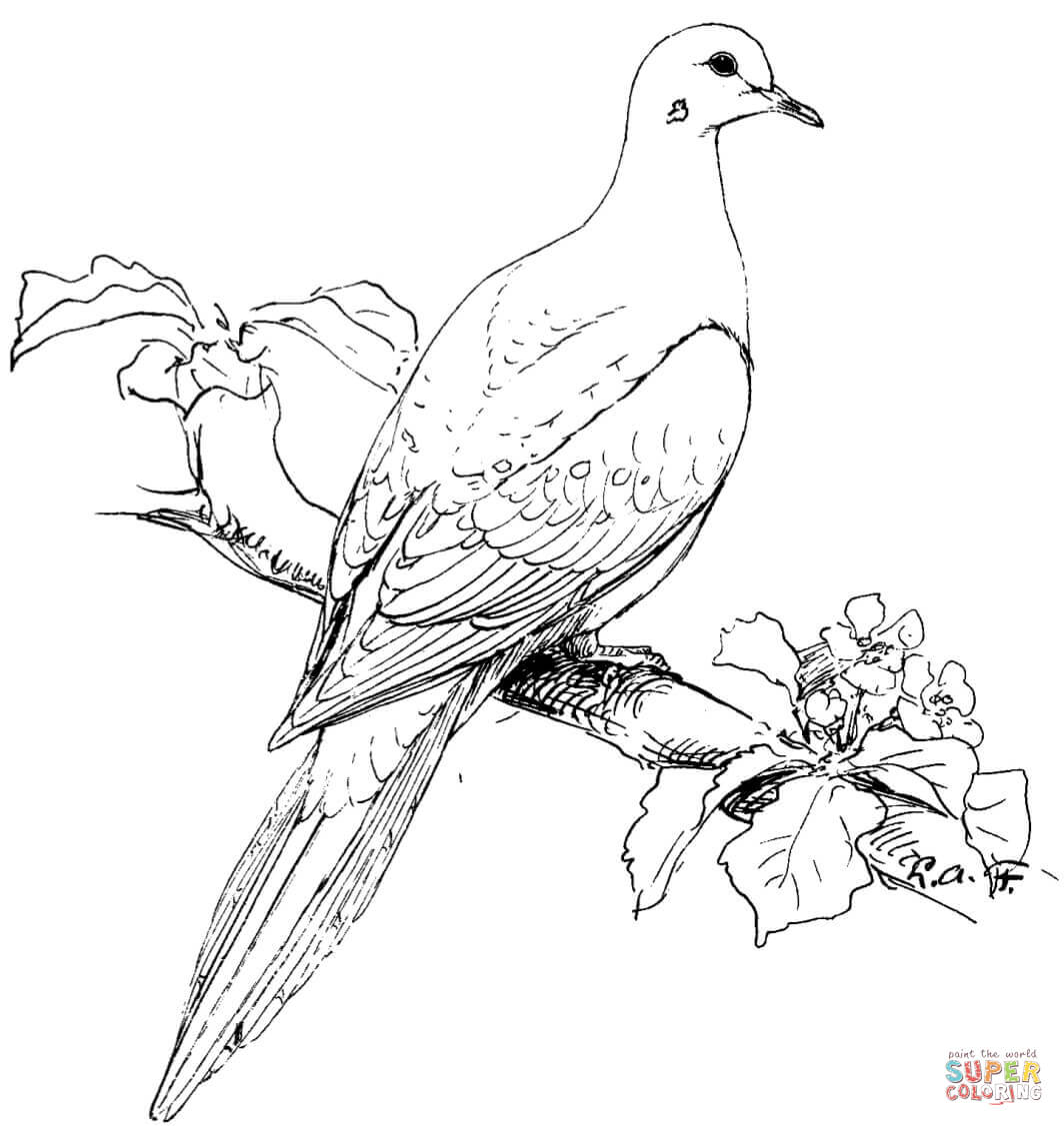 free printable coloring pages birds winter bird coloring pages download and print for free printable birds coloring pages free