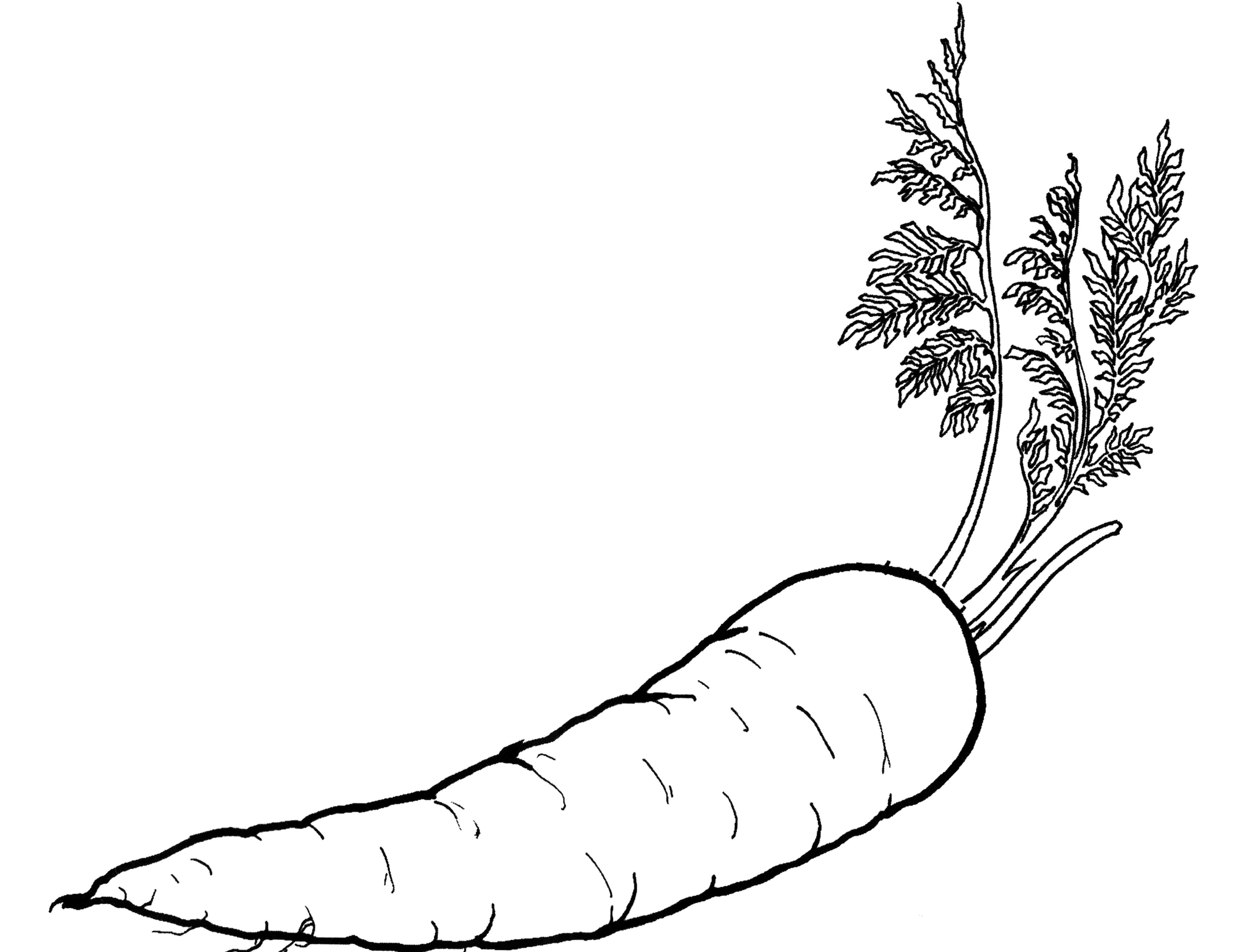 free printable coloring pages of vegetables easy free coloring pages of fruits vegetables printable printable coloring free of vegetables pages