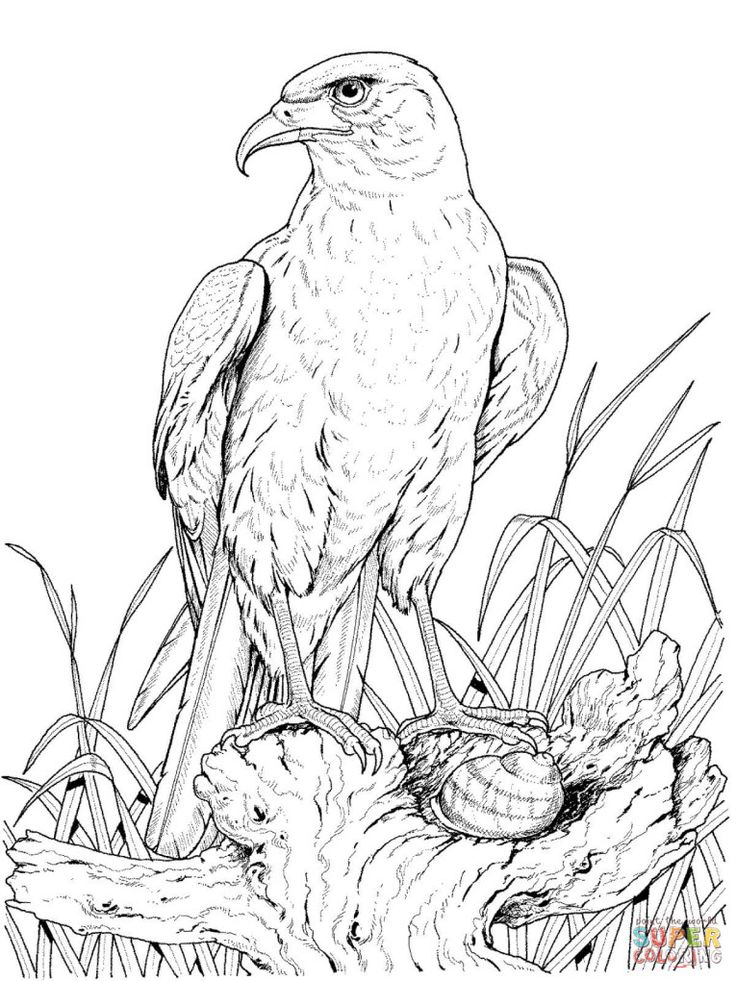 free printable eagle coloring pages free eagle coloring pages pages free eagle printable coloring