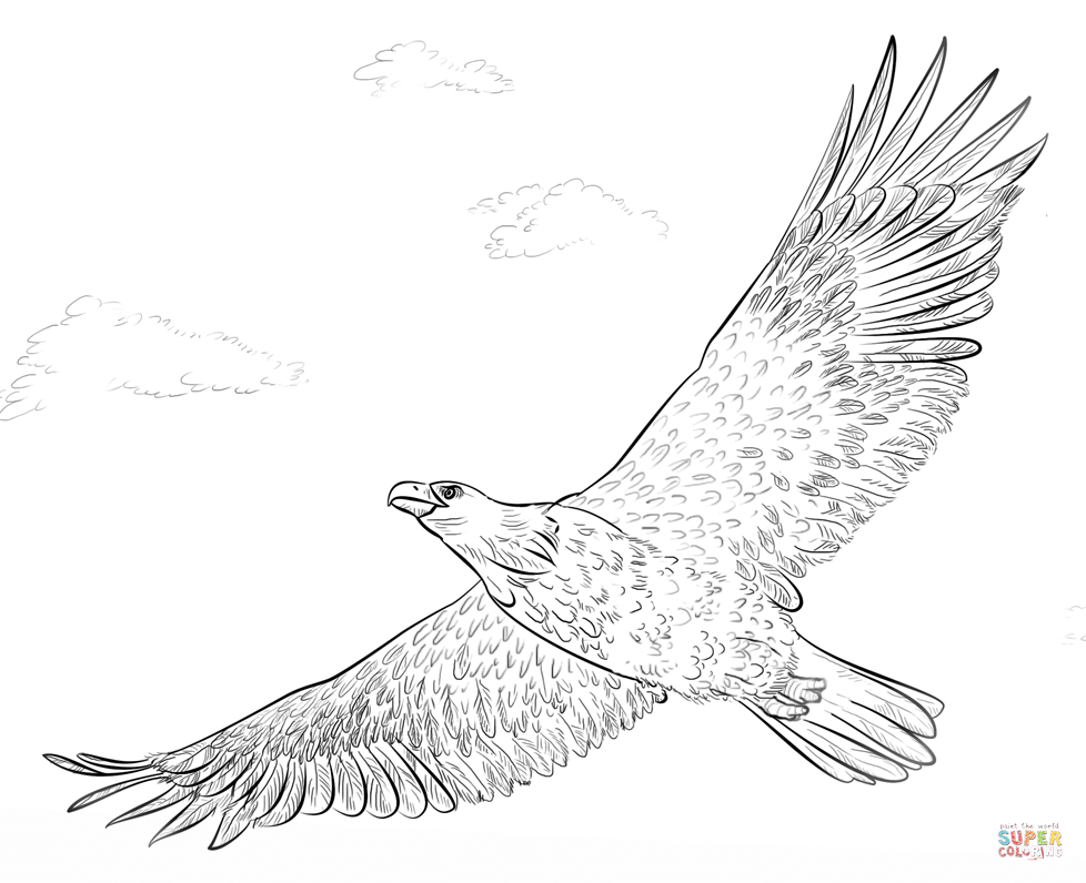 free printable eagle coloring pages free printable eagle coloring pages for kids coloring eagle free printable pages