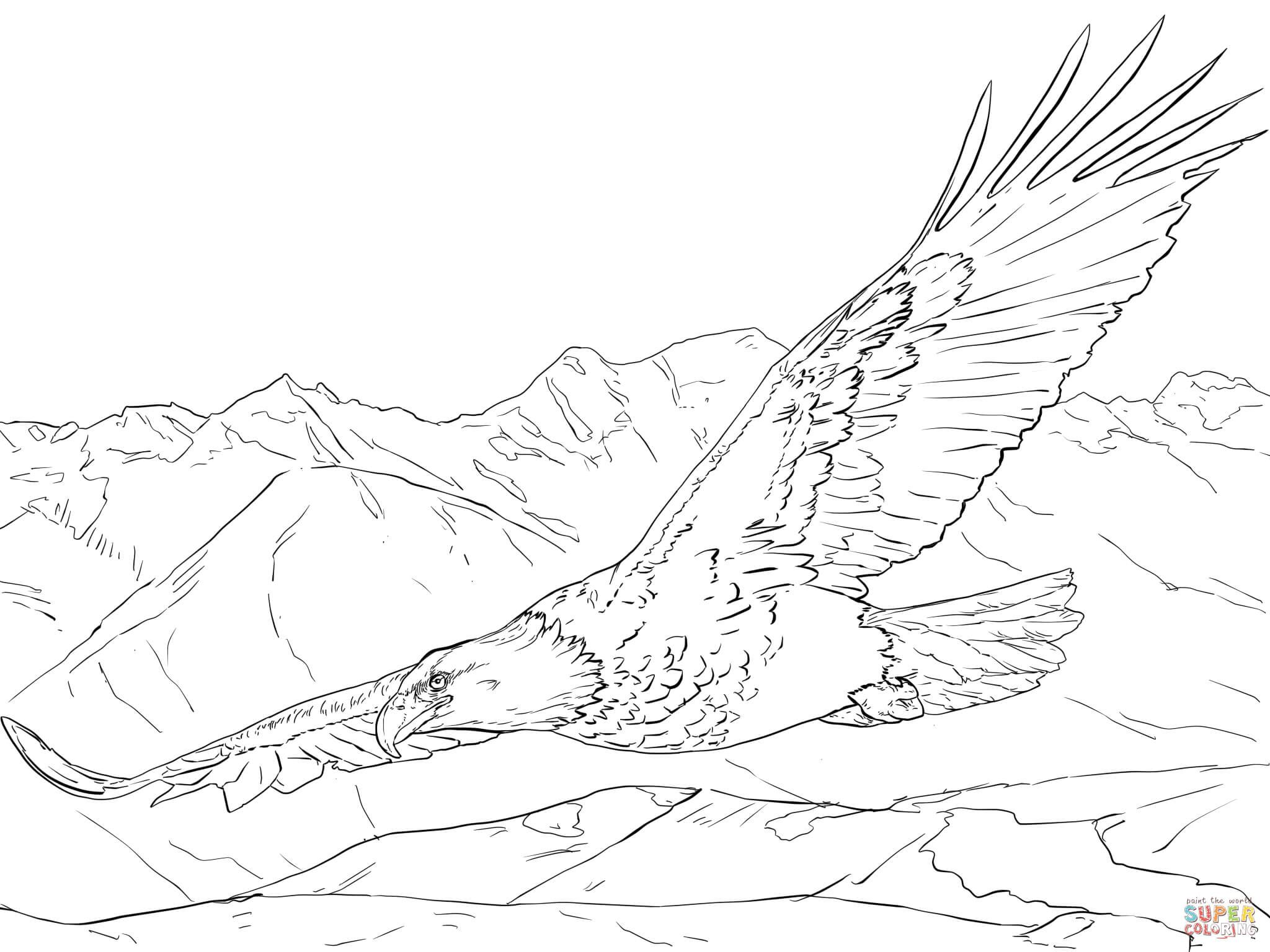 free printable eagle coloring pages golden eagle drawing at getdrawings free download pages printable eagle coloring free