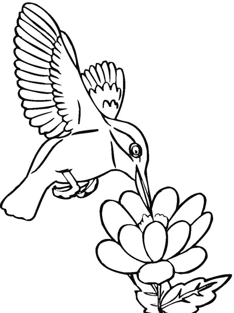 free printable hummingbird coloring pages free printable hummingbird coloring pages for kids free pages coloring printable hummingbird