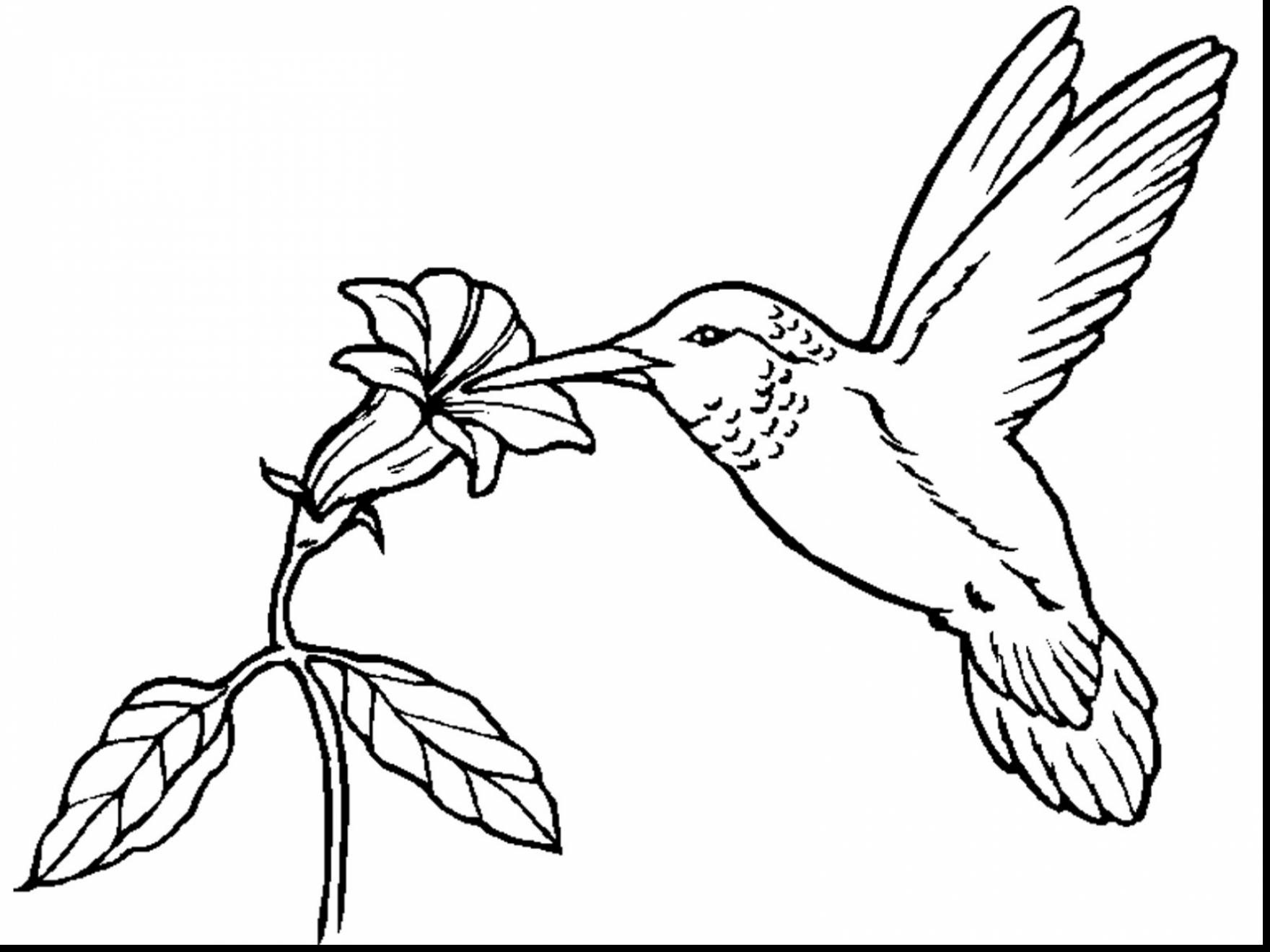 free printable hummingbird coloring pages free printable hummingbird coloring pages for kids printable hummingbird coloring free pages