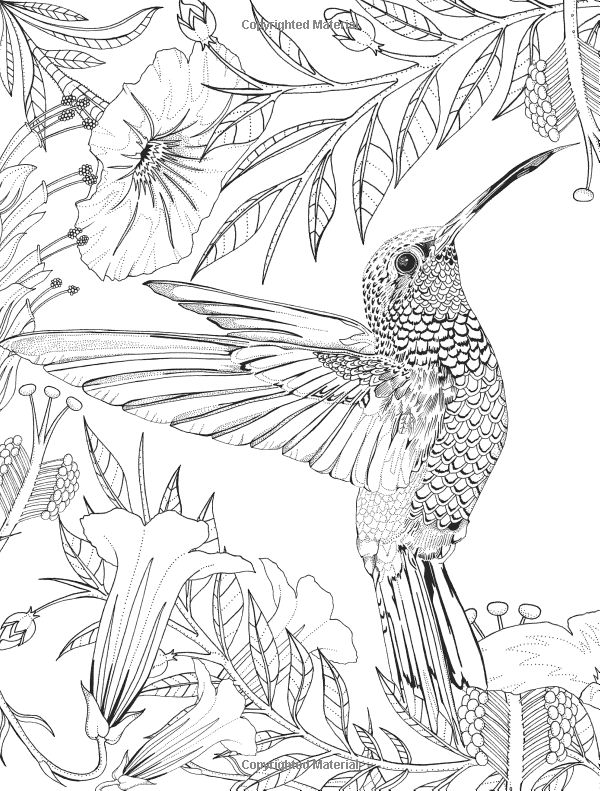 free printable hummingbird coloring pages get this free hummingbird coloring pages to print 00029 hummingbird printable coloring pages free