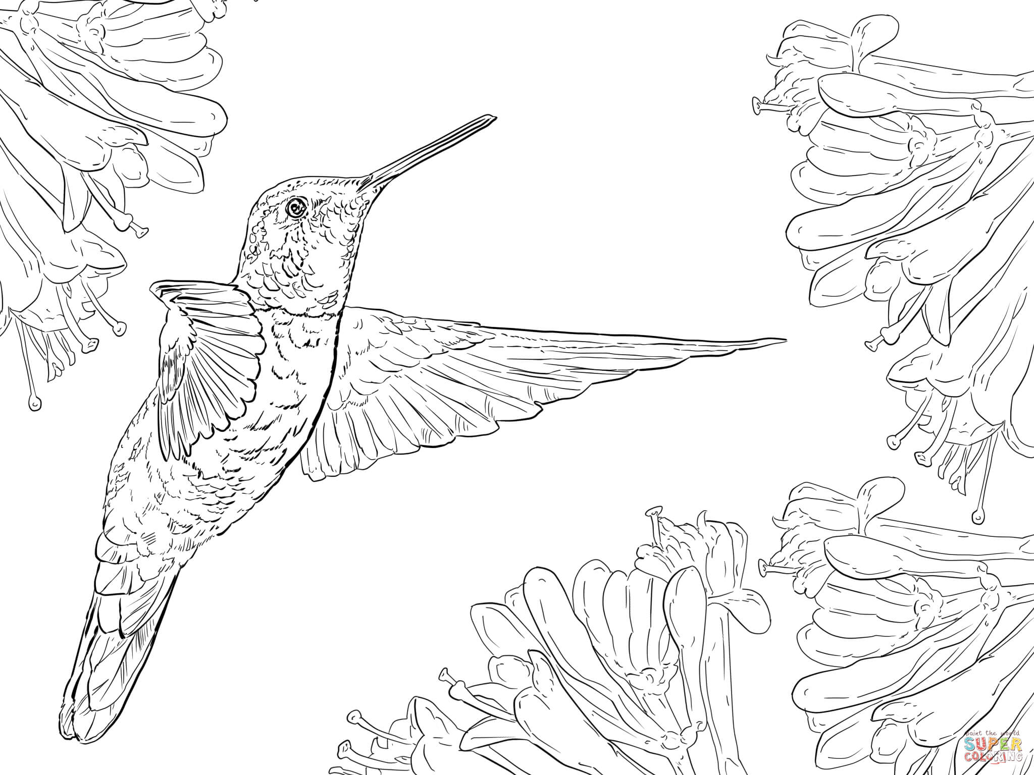 free printable hummingbird coloring pages hummingbird coloring pages to download and print for free printable coloring hummingbird pages free