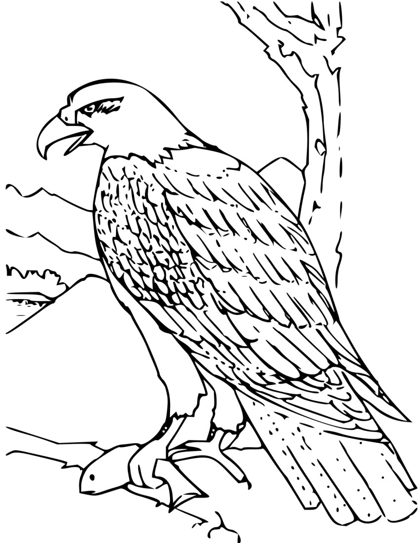 free printable pictures of eagles 21 best eagle coloring pages images on pinterest eagles of free printable eagles pictures