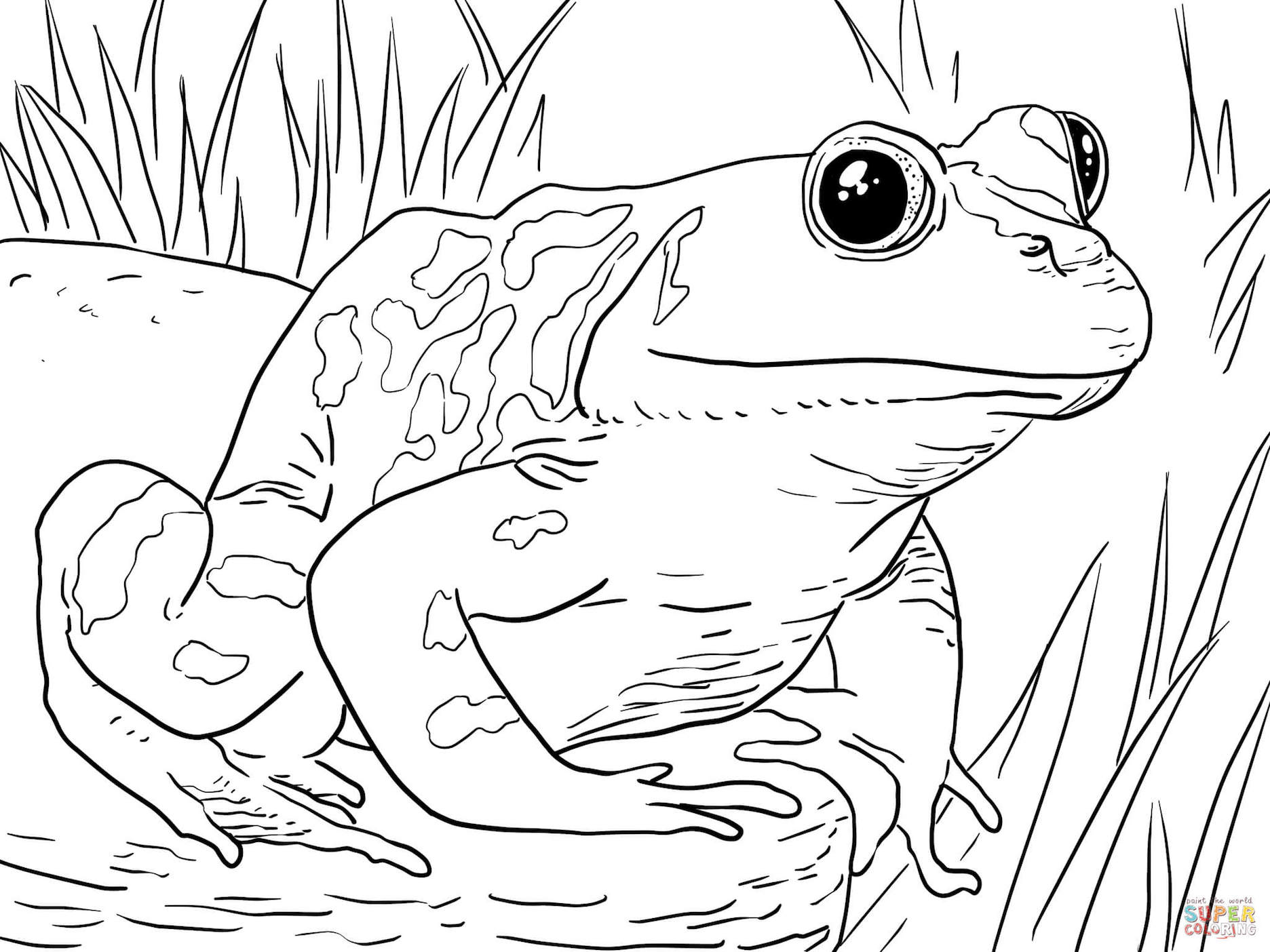 frog coloring book frog coloring pages clipart and other free printable frog book coloring