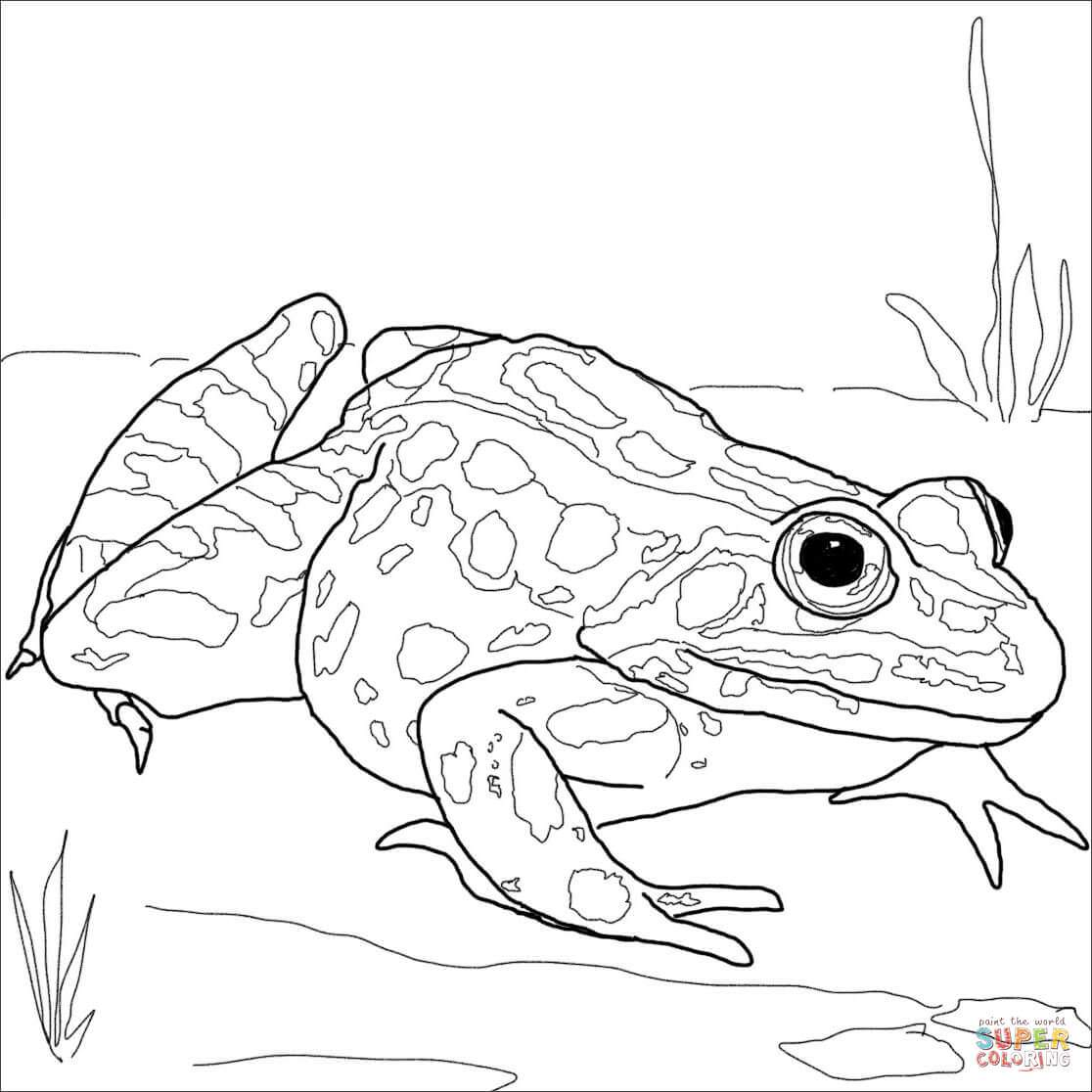 frog face coloring page frog mask coloring page woo jr kids activities page face coloring frog