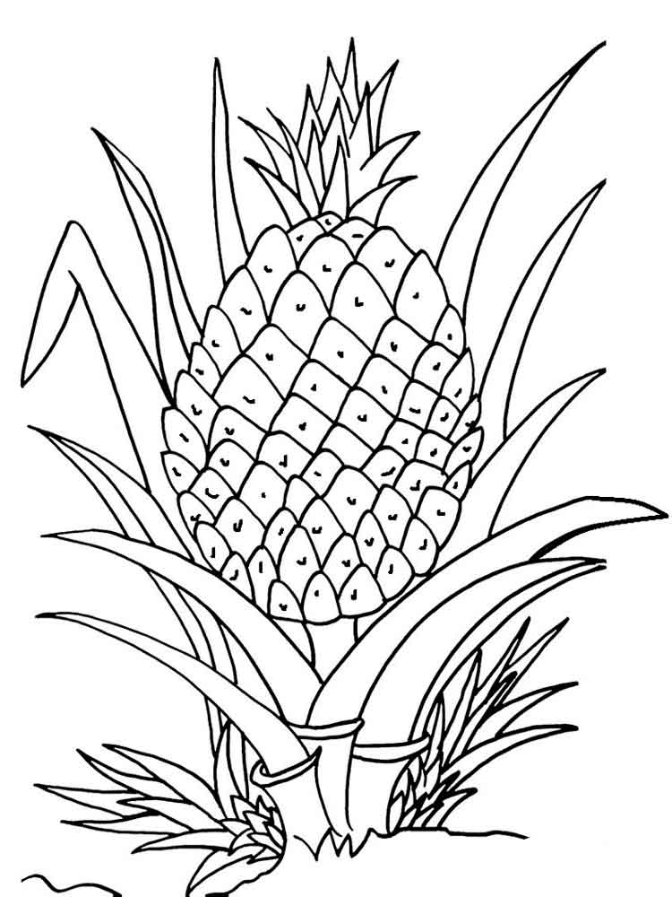 fruit coloring free printable fruit coloring pages for kids fruit coloring