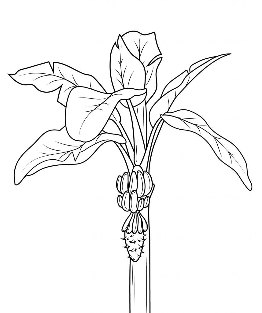 fruit tree coloring page coloring page sweet fruit on the tree fruit coloring page tree