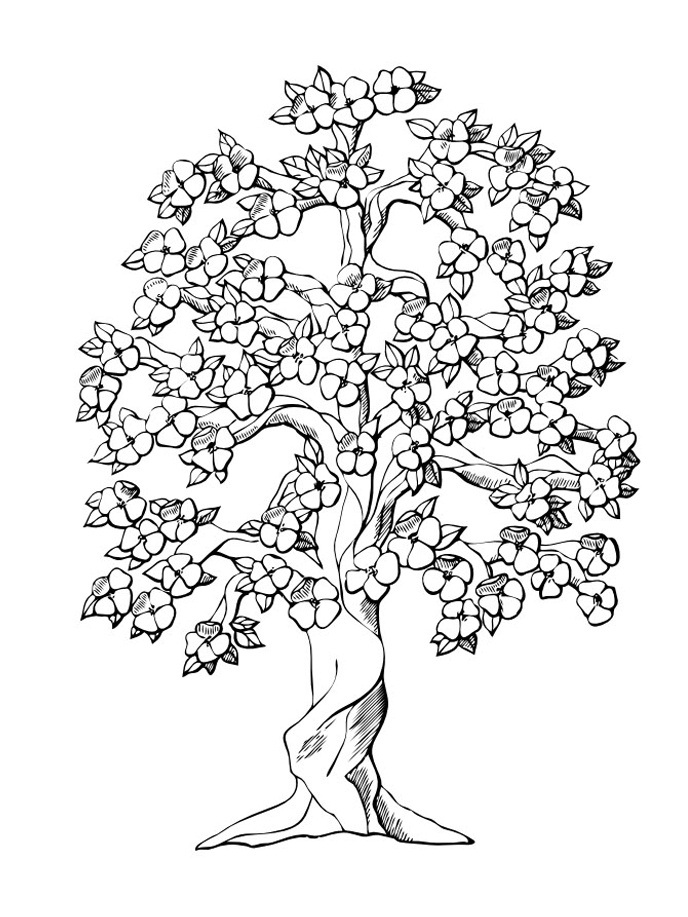 fruit tree coloring page papaya tree coloring pages at getcoloringscom free tree fruit page coloring