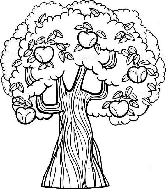 fruit tree coloring page tree sweet apple tree with fruit to color coloring pages fruit tree coloring page