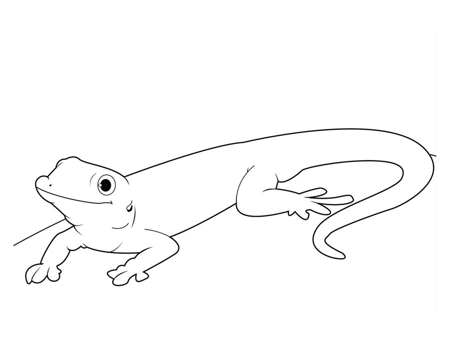 gecko lizard coloring pages crested gecko coloring page free printable coloring pages coloring pages lizard gecko