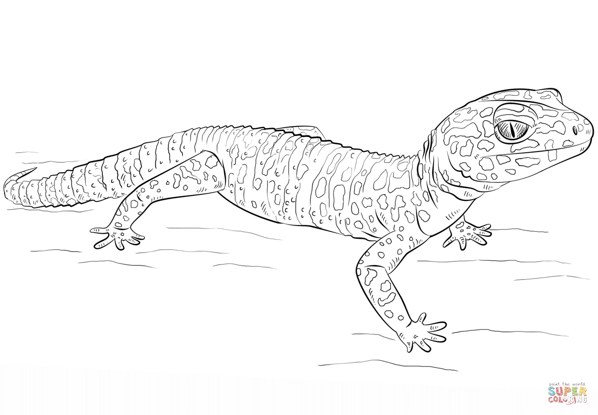gecko lizard coloring pages gecko coloring page at getcoloringscom free printable coloring gecko pages lizard