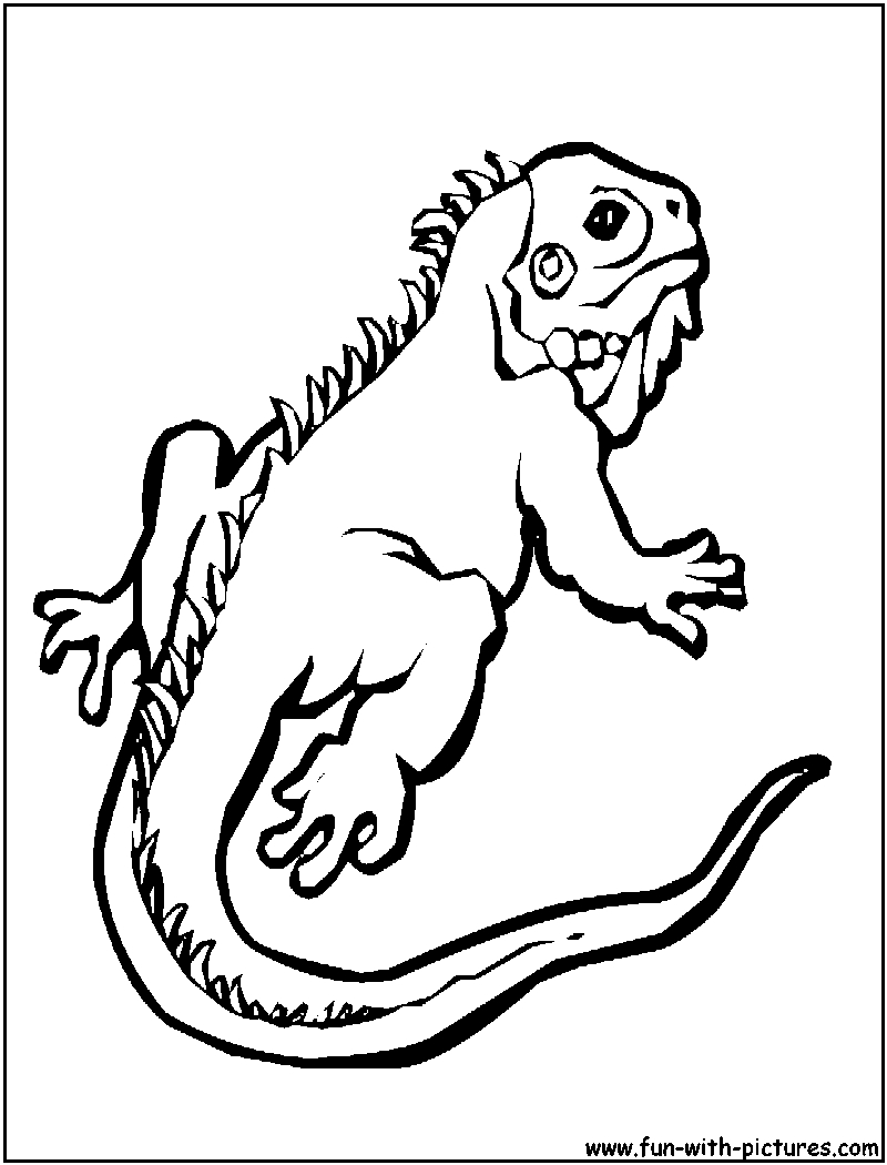 gecko lizard coloring pages gecko coloring pages best coloring pages for kids gecko coloring pages lizard