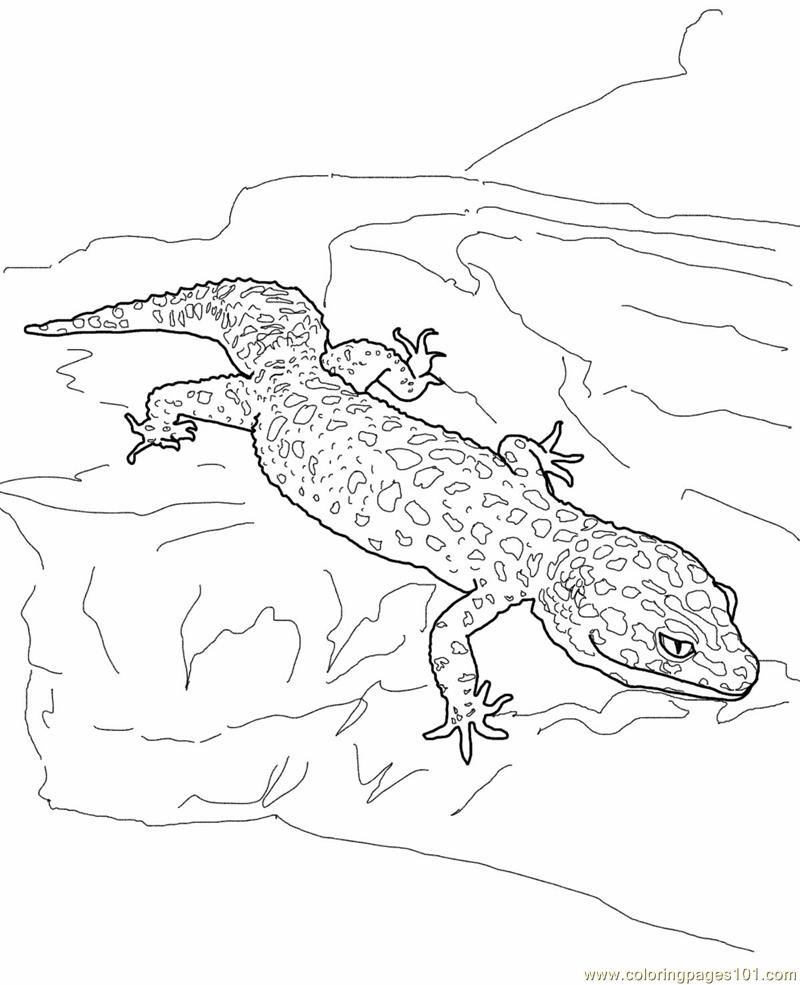 gecko lizard coloring pages gecko drawing template at getdrawings free download pages lizard gecko coloring