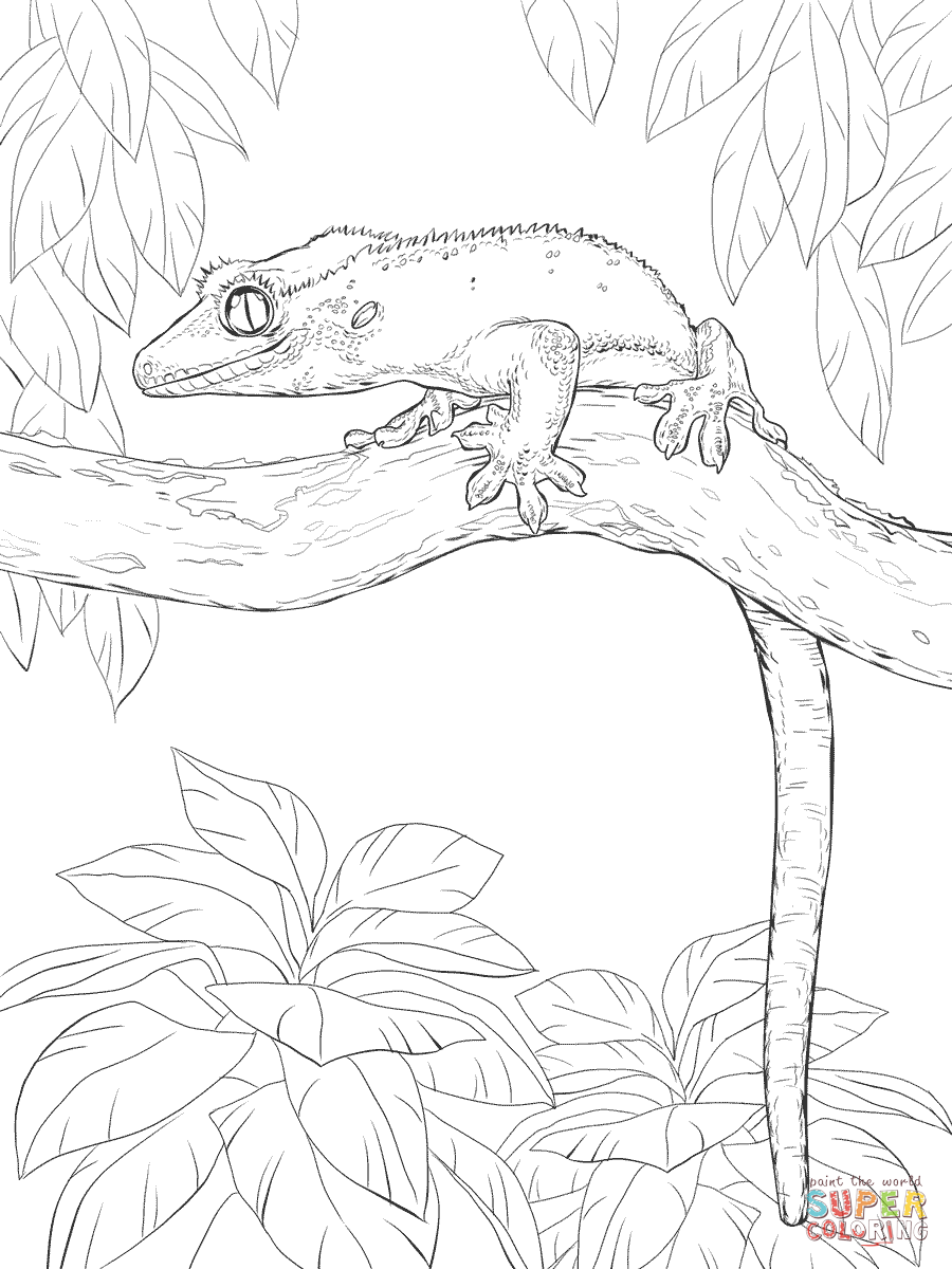 gecko lizard coloring pages gecko lizard coloring pages coloring gecko lizard pages