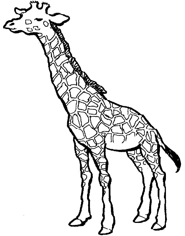 giraffe coloring image cool coloring pages czerwca 2011 image giraffe coloring