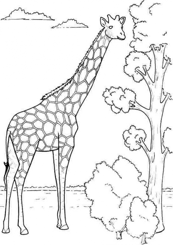giraffe coloring image get this difficult adult coloring pages to print out 45281 image giraffe coloring