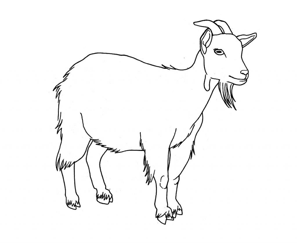 goat coloring download high quality goat clipart black and white coloring goat