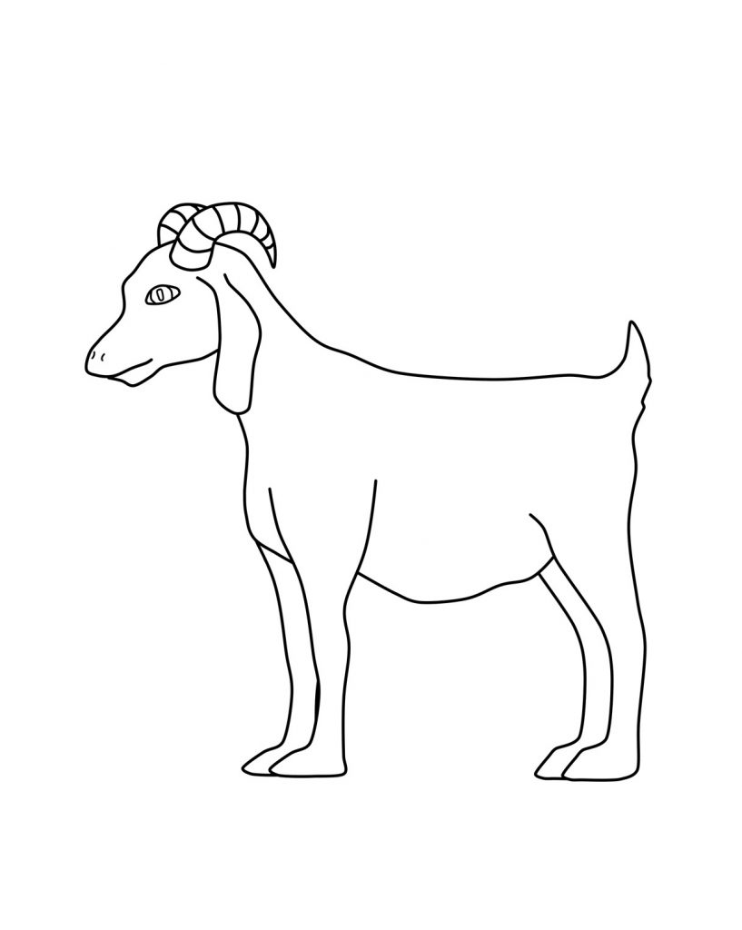 goat coloring drawing goat coloring pages color luna goat coloring