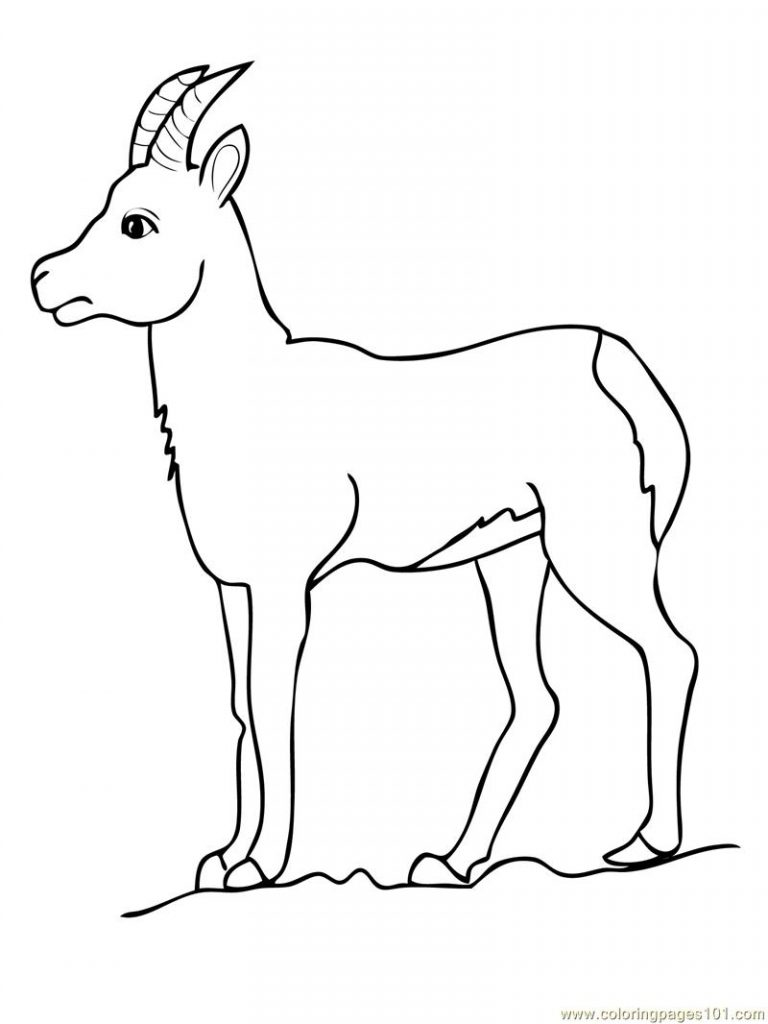 goat coloring free printable goat coloring pages for kids coloring goat