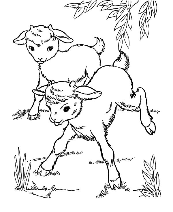 goat coloring free printable goat coloring pages for kids goat coloring 1 1
