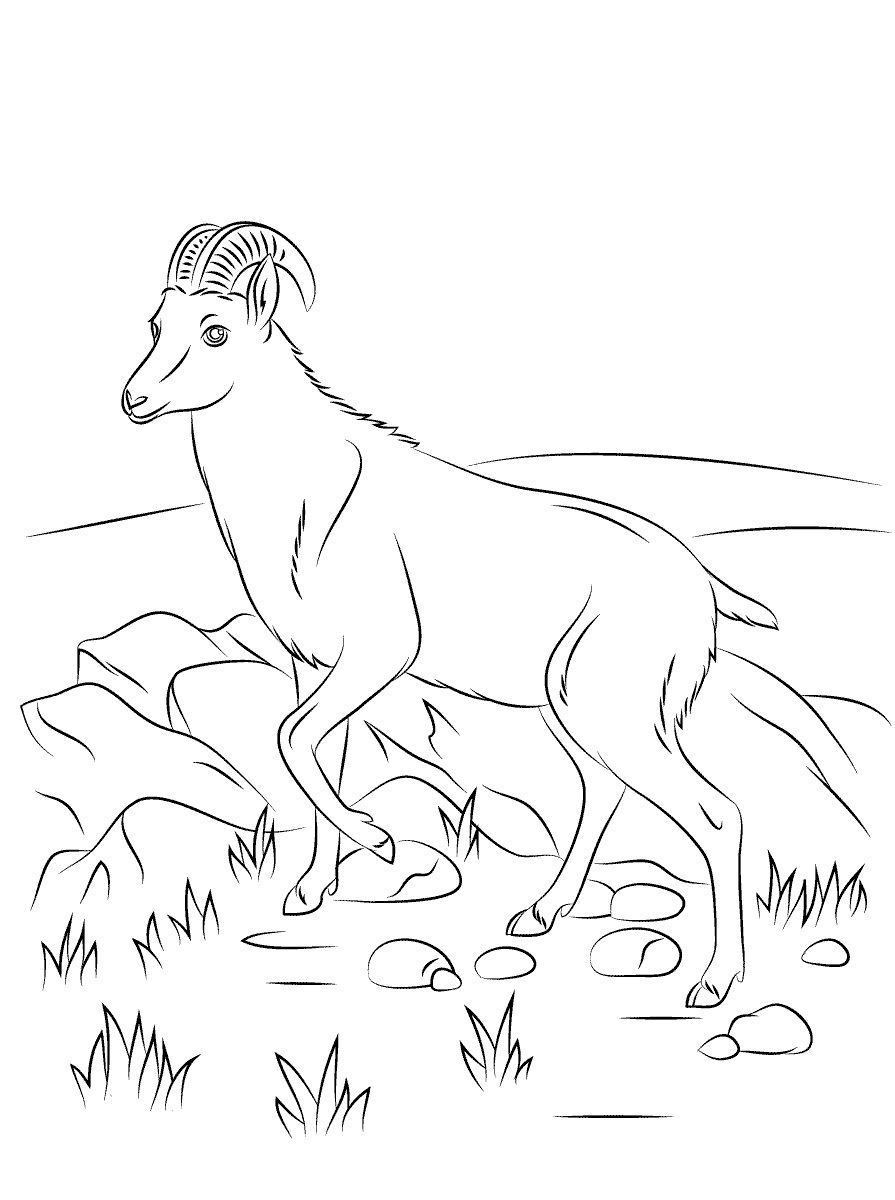 goat pictures to color 19 animal goats printable coloring sheet pictures goat color to