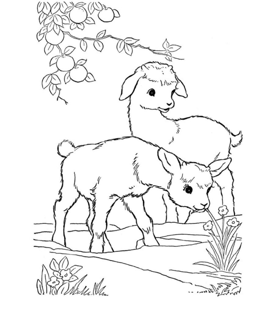 goat pictures to color free printable goat coloring pages for kids color goat pictures to